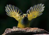 Beauty_of_The_Birds Sparrow Ready To Fly