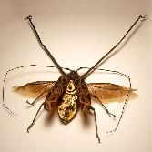 Steampunk-insects By Metal Scrap (12)