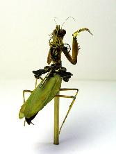 Steampunk-insects By Metal Scrap (8)