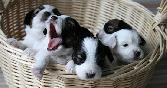 Black And White Puppies Playing In Bucket
