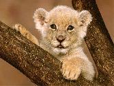 Cub At Tree