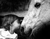 Cute Girl Kissing Horse