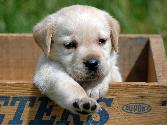 Cute Puppy Calling Someone