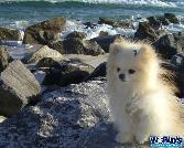 Cute Puppy Near Sea