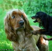 Fearfull Puppy