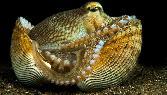 Golden Fish Pearl Look