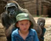 Gorilla-and-child