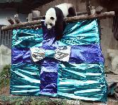 Panda-present