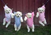 Puppies Drying