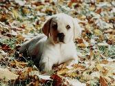 Puppy In Automn