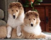 Puppy On Puppy