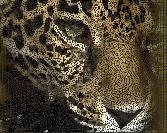 Tiger Cube Art