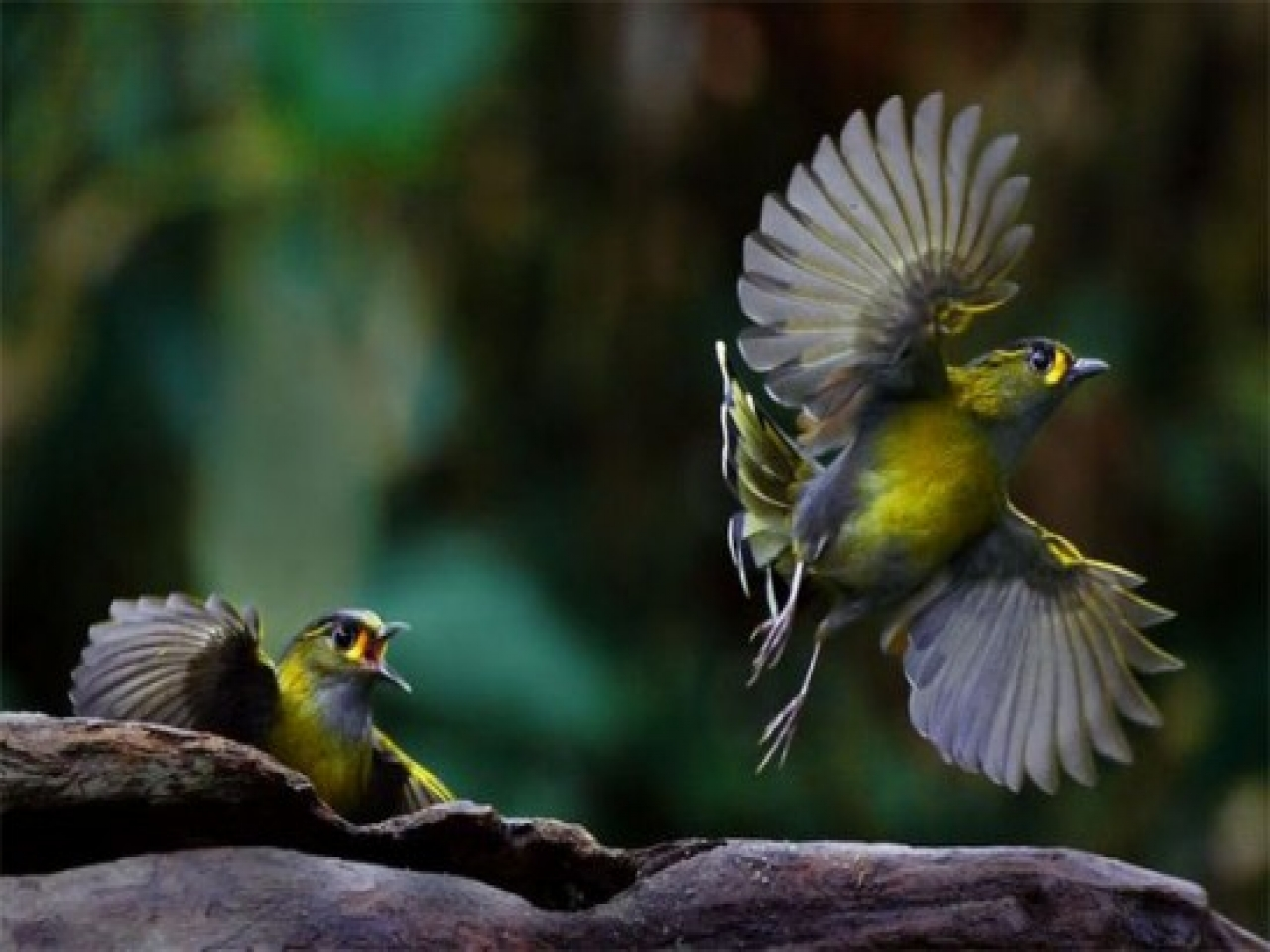 Wallpapers Beauty Of The Birds Flying Beautiful Sparrow